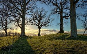 Pictures Sunrises and sunsets Trees Grass HDRI Branches Nature
