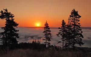 Fotos Schweden Landschaftsfotografie Sonnenaufgänge und Sonnenuntergänge Sonne Bäume Natur