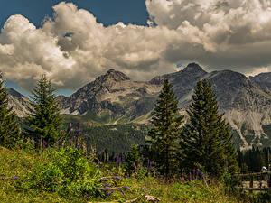 Bilder Schweiz Berg Lupinen Landschaftsfotografie Alpen Wolke Fichten Arosa, Grisons