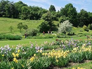 Hintergrundbilder Schweiz Park Schwertlilien Bäume Design Basel Natur