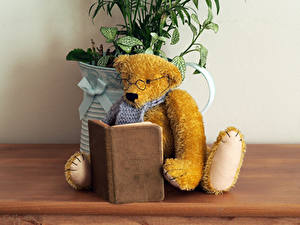 Hintergrundbilder Teddy Bücher Brille Lesen