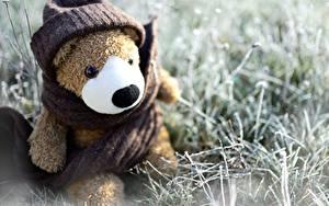 Hintergrundbilder Teddy Spielzeug Sitzt Mütze Schal Gras