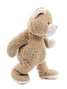 Hintergrundbilder Teddybär Weißer hintergrund
