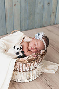 Bilder Teddybär Weidenkorb Säugling Schlaf kind