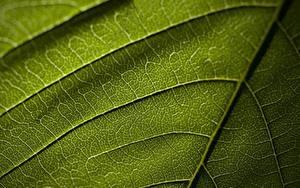 Tapety na pulpit Tekstura Zbliżenie Liście Zielony przyroda