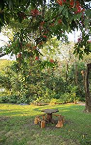 Fotos Thailand Bangkok Park Ast Tisch Bank (Möbel) Natur