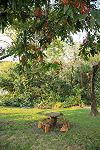 Fotos Thailand Bangkok Park Ast Tisch Bank (Möbel)