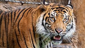 Mirada Tigre 2048x1152 Fondos De Pantalla Gratis 65 Fotos