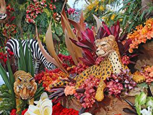 Fotos Tiger Orchideen Rosen Design Pasadena Natur