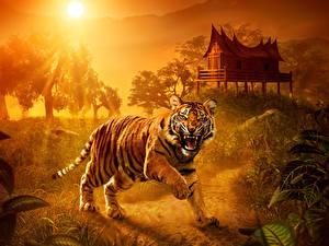 Hintergrundbilder Tiger Sonne ein Tier