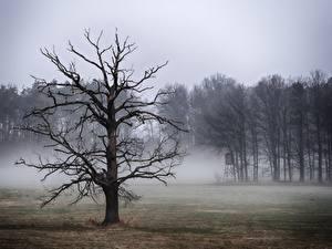 Hintergrundbilder Bäume Nebel Ast