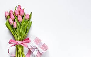 Bilder Tulpen Blumensträuße Schleife Schachtel Geschenke Rosa Farbe Vorlage Grußkarte Blumen