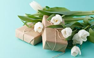 Fotos Tulpen Blumensträuße Geschenke Farbigen hintergrund Blüte