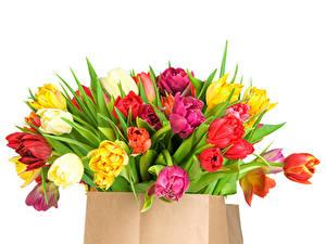Bilder Tulpen Sträuße Mehrfarbige Tüte Weißer hintergrund