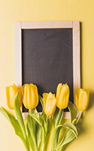 Bilder Tulpen Farbigen hintergrund Vorlage Grußkarte Gelb Blumen