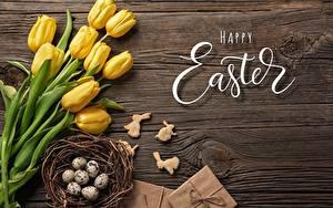Hintergrundbilder Tulpen Ostern Ei Englischer Text Nest Blumen