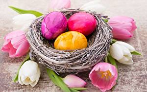 Hintergrundbilder Tulpen Ostern Nest Ei Blumen
