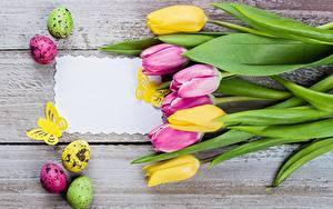 Fotos Tulpen Ostern Vorlage Grußkarte Ei Bretter Blumen