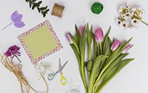 Hintergrundbilder Tulpen Grauer Hintergrund Vorlage Grußkarte Rosa Farbe Blatt Blumen