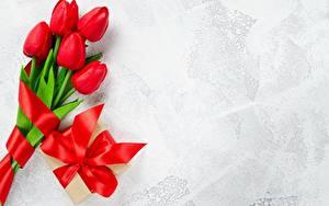 Hintergrundbilder Tulpen Rot Schleife Vorlage Grußkarte Blumen