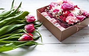 Hintergrundbilder Tulpen Rosen Macaron
