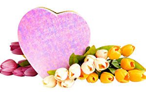 Images Tulips Valentine's Day White background Heart Multicolor Flowers