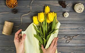 Bilder Tulpen Gelb Hand Bretter Blumen