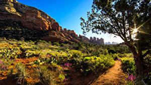 Bilder USA Bäume Strauch Lichtstrahl Weg Felsen Arizona