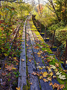 Fotos Vereinigte Staaten Herbst Eisenbahn Washington Bretter Blatt Laubmoose Natur