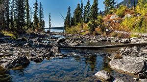 Bilder USA Herbst Stein Parks Bäume Grand Teton national Park, Wyoming Natur