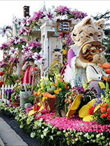 Wallpaper USA Cats Tulips Roses Orchid California Design Rose Parade Pasadena Nature