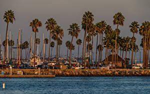 Fotos USA Küste Haus Bootssteg Palmen Shoreline Village Long Beach Städte