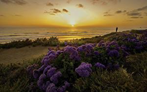 Fotos Vereinigte Staaten Küste Sonnenaufgänge und Sonnenuntergänge Landschaftsfotografie Abend San Diego Sonne