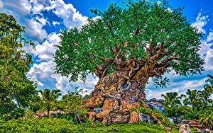 Hintergrundbilder Vereinigte Staaten Disneyland Park Kalifornien Anaheim Design Bäume HDRI Natur