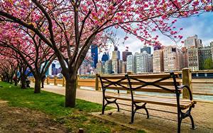 Bilder Vereinigte Staaten Blühende Bäume Gebäude New York City Waterfront Bank (Möbel) HDRI Städte