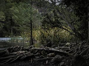 Fotos Vereinigte Staaten Wälder See Texas Austin Natur