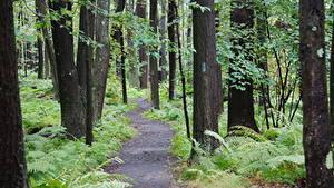 Fotos USA Wälder Park Bäume Weg State Park Laurel Summit, Pennsylvania Natur