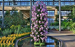 Hintergrundbilder Vereinigte Staaten Garten Orchideen Design Longwood Gardens Blüte