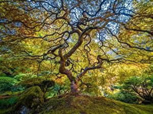 Hintergrundbilder USA Garten Park Bäume Ast Portland Japanese Garden