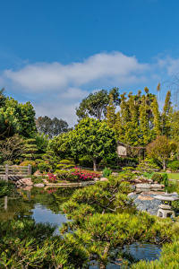 Bilder Vereinigte Staaten Garten Teich Bäume Strauch Earl Burns Miller Japanese Garden Long Beach Natur