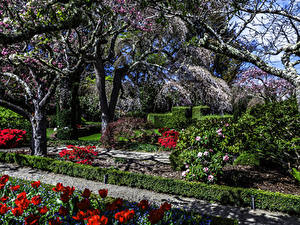 Wallpaper USA Gardens Spring Flowering trees Tulips California Filoli Gardens Nature