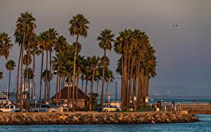 Fotos Vereinigte Staaten Haus Küste Kalifornien Dorf Palmen Shoreline Village Long Beach Städte