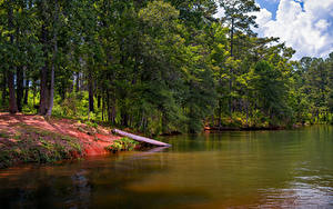 Hintergrundbilder Vereinigte Staaten See Park Küste Florida Bäume Anderson Park West Point Lake Natur
