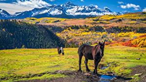 Bilder Vereinigte Staaten Gebirge Herbst Pferde Wilson Peak, Colorado Natur Tiere