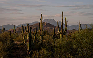 Fotos USA Gebirge Kakteen Four Peaks, Arizona