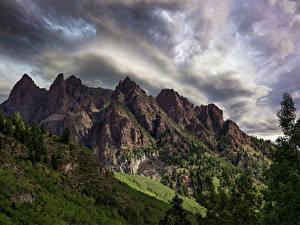 Fotos USA Berg Ast Sievers Mountain Colorado