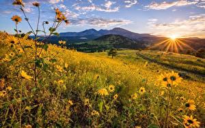 Bilder USA Berg Sonnenblumen Morgen Landschaftsfotografie Grünland Sonne Lichtstrahl Flagstaff, Arizona