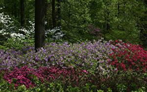 Hintergrundbilder USA Park Alstroemeria New York City Strauch Botanical Garden Natur