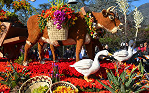 Fotos USA Park Kuh Geese Rosen Kalifornien Design Rose Parade Pasadena Natur