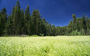 Bilder Vereinigte Staaten Parks Wälder Acker Sequoia National Park Natur
